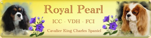 Royal-Pearl-Cavaliere